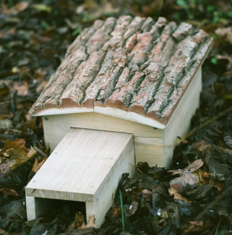 Choosing the location of your wildlife box